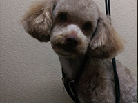 Beyond Grooming: PET WASHING & GROOMI in San Marcos. Call today - (512) 364-9634